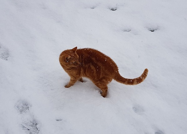 Cat in Snow, Exeter